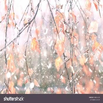 Tree branches with flying autumn leaves under the first falling snow ,