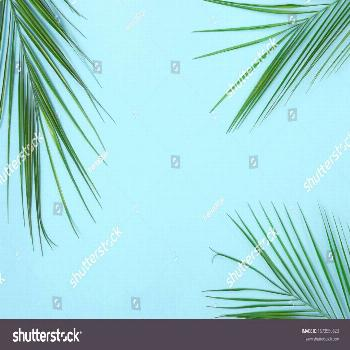 tropical green palm leaves , branches pattern frame on blue background. top py space.abstract. ,