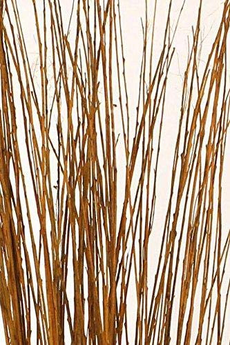 Green Floral Craft | 60-70 Stem Dried Asian Willow